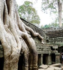 Root_Ta_Prohm